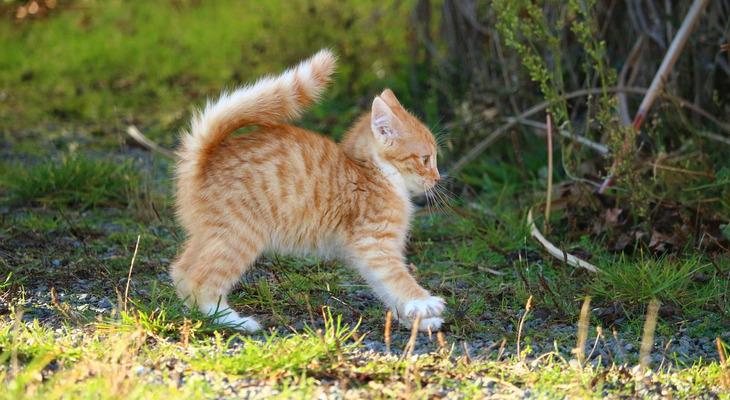猫背・円背(えんぱい)の予防・改善