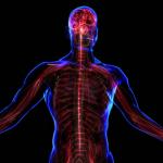 自律神経のイメージ図